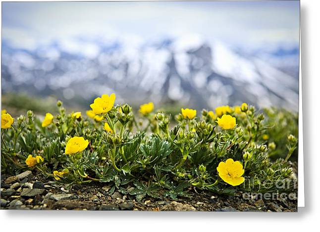 Alpine Meadow In Jasper National Park Greeting Card