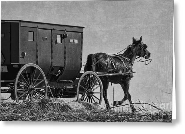 Amish Buggy Black And White Greeting Card by David Arment