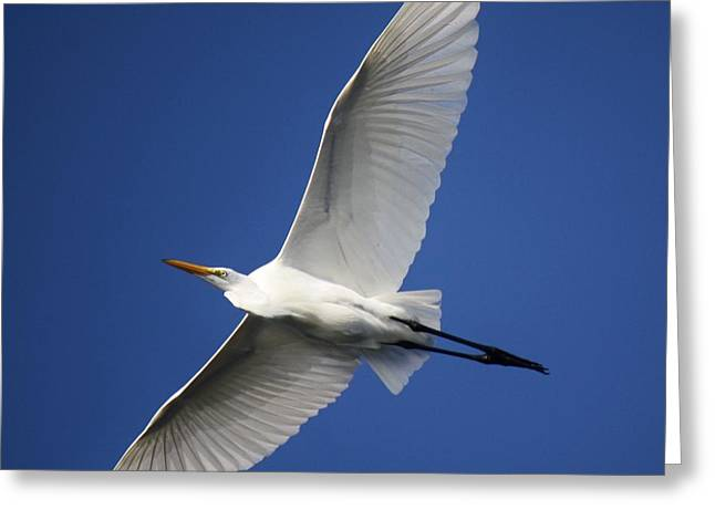 Angelic Greeting Card by Paulette Thomas