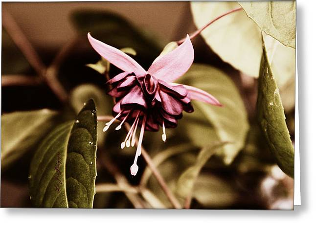 Greeting Card featuring the photograph Antiqued Fuchsia by Jeanette C Landstrom