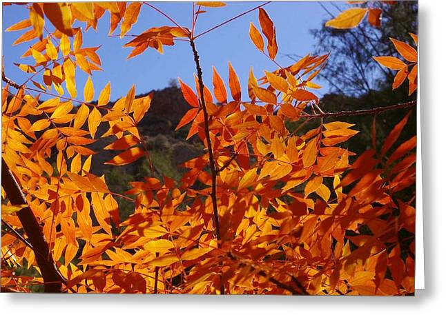 Arizona Fall Greeting Card