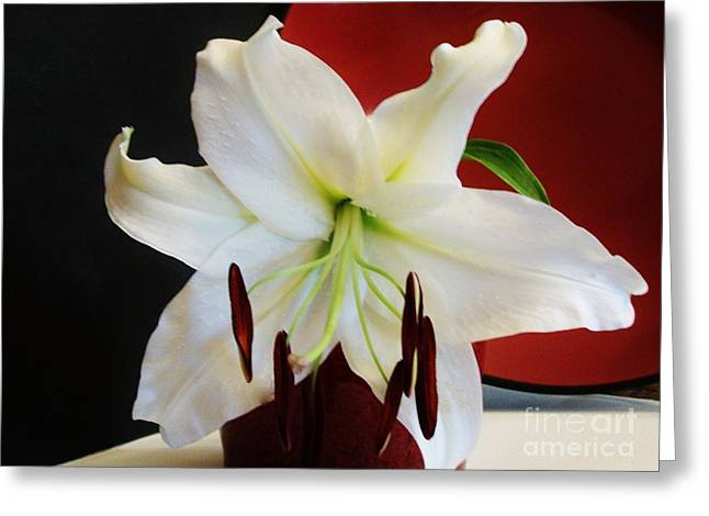 Asciatic Lily Greeting Card by Marsha Heiken