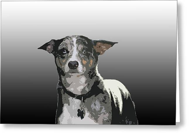 Australian Cattle Dog Sheltie Mix Greeting Card by One Rude Dawg Orcutt