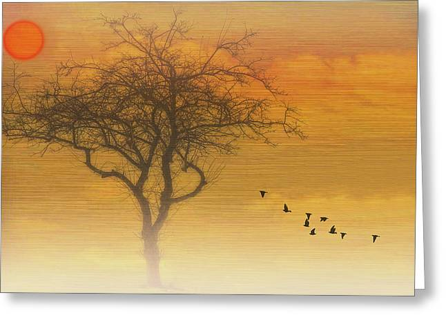 Back To The Nest Greeting Card by Tom York Images