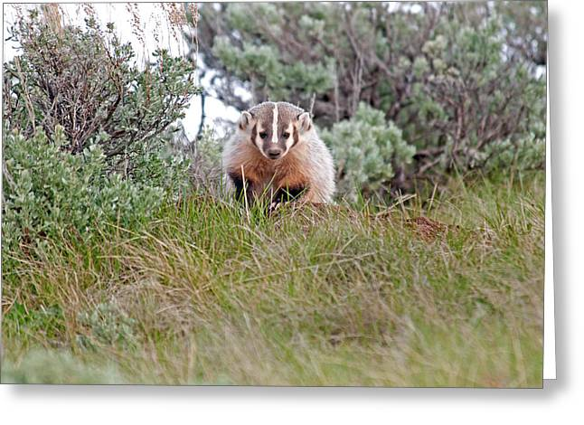 Badger Greeting Card by Elijah Weber