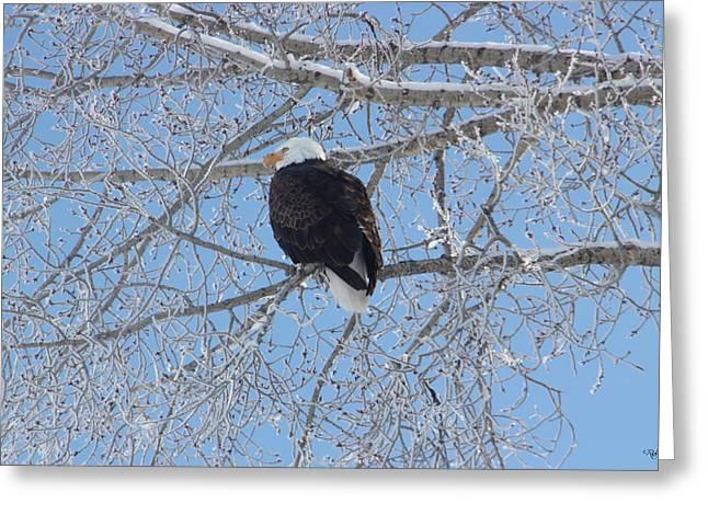 Bald Eagle Greeting Card by Rick Thiemke