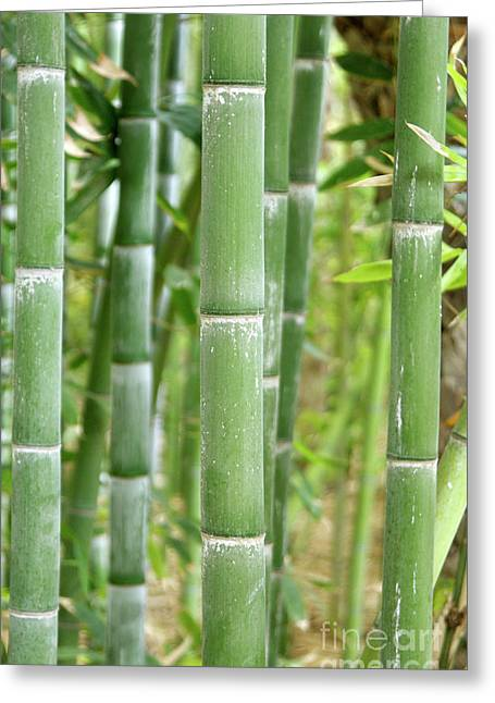 Bamboo (phyllostachys Sp.) Greeting Card by Johnny Greig