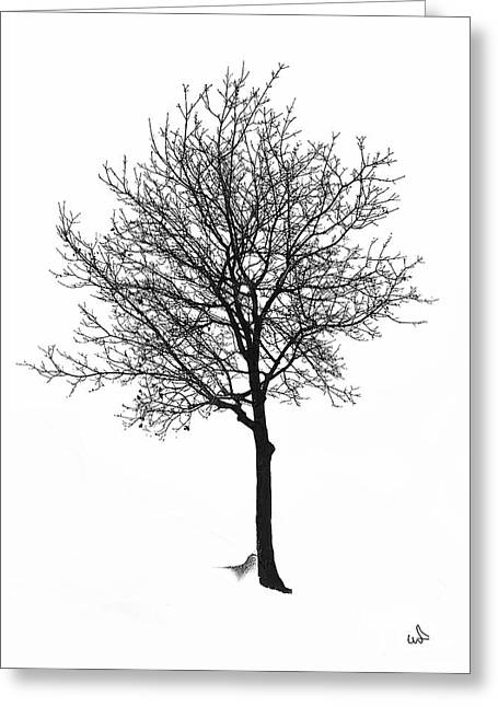 Bare Winter Tree Greeting Card by Michael Flood