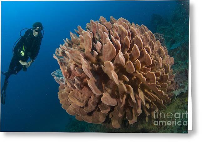 Barrel Sponge And Diver, Papua New Greeting Card by Steve Jones