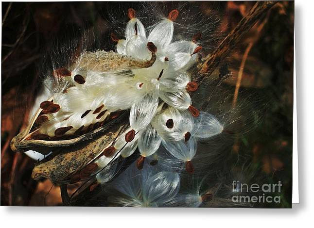 Greeting Card featuring the photograph Beautiful Nature 2 by Jasna Gopic