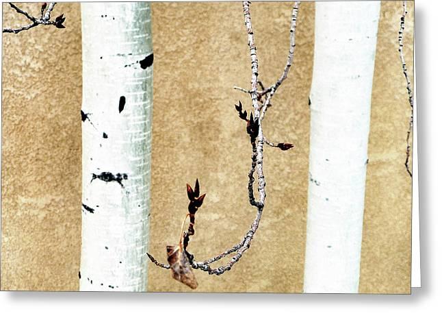 Birch Greeting Card
