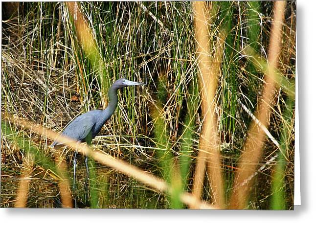 Greeting Card featuring the photograph Bird At Viera by Jeanne Andrews