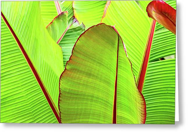 Bird Of Paradise Greeting Card by Ann Murphy