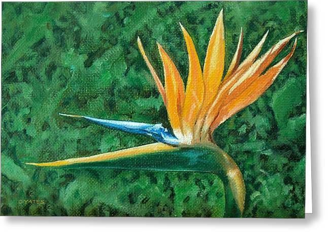 Bird Of Paradise Greeting Card by Charles Yates