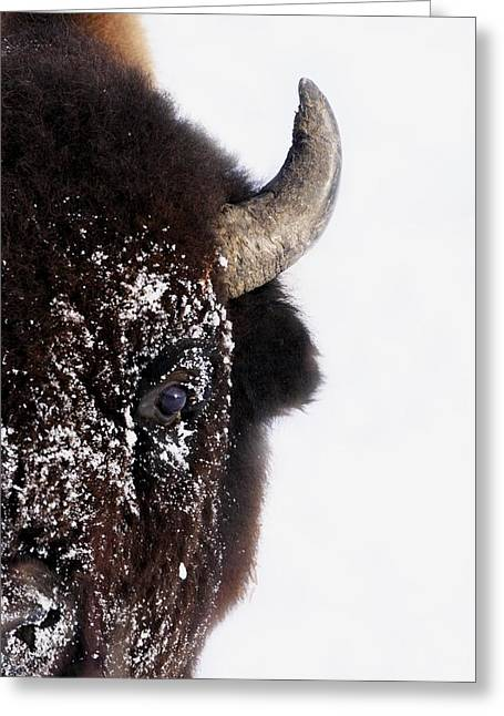 Bison In Winter Greeting Card by Richard Wear