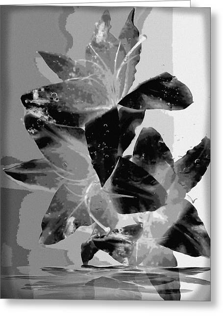 Black And White Lily Greeting Card by Carolyn Repka