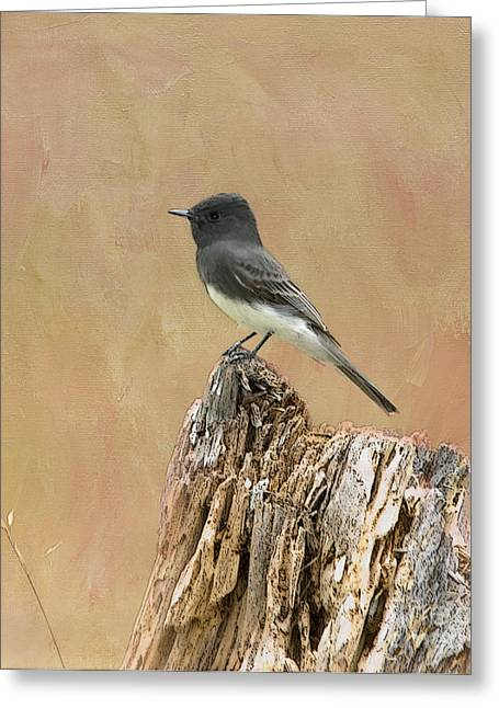 Black Phoebe Greeting Card by Betty LaRue