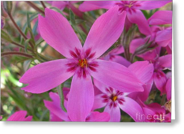 Blissful Greeting Card by Tina Marie