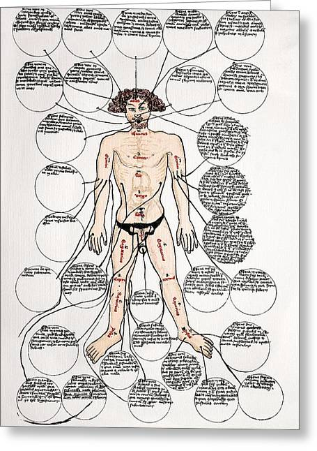 Bloodletting Sites, 15th Century Diagram Greeting Card by Sheila Terry