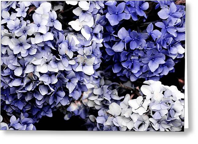 Blue Bloom Cluster  Greeting Card by JAMART Photography