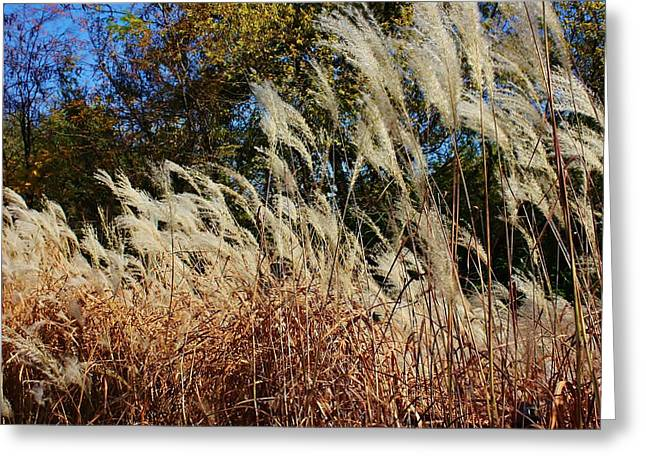 Blowing In The Wind Greeting Card by Bruce Bley