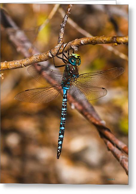 Blue Darner Greeting Card by Mitch Shindelbower