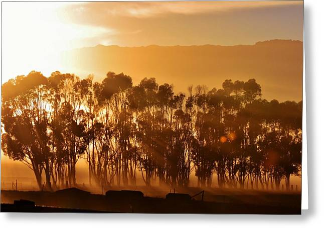 Greeting Card featuring the photograph Blue Gum Trees by Werner Lehmann