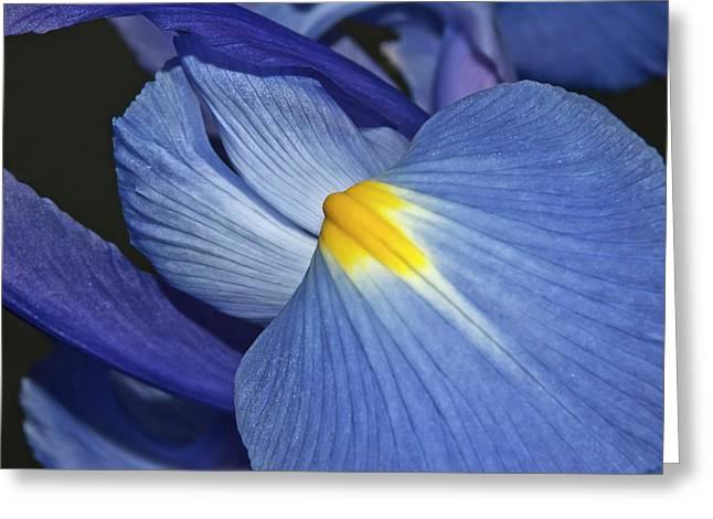 Blue Iris Greeting Card by Carolyn Marshall