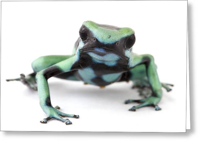 Blue Poison Dart Frog Barbilla Np Costa Greeting Card by Piotr Naskrecki