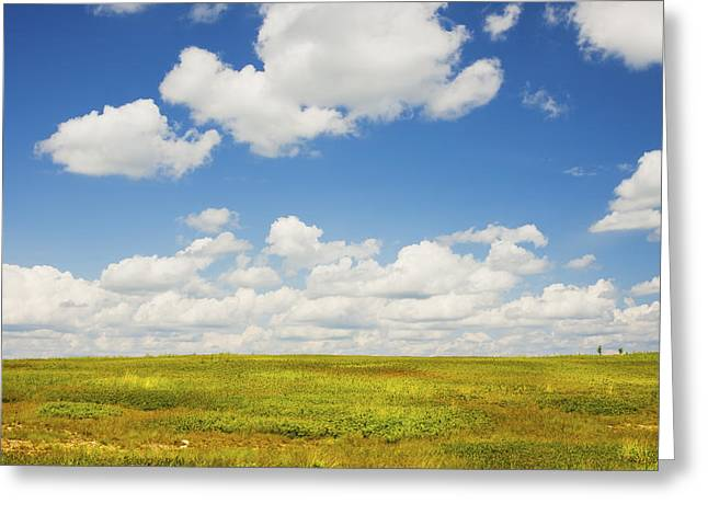 Blue Sky And Clouds Over Blueberry Field In Maine Greeting Card by Keith Webber Jr