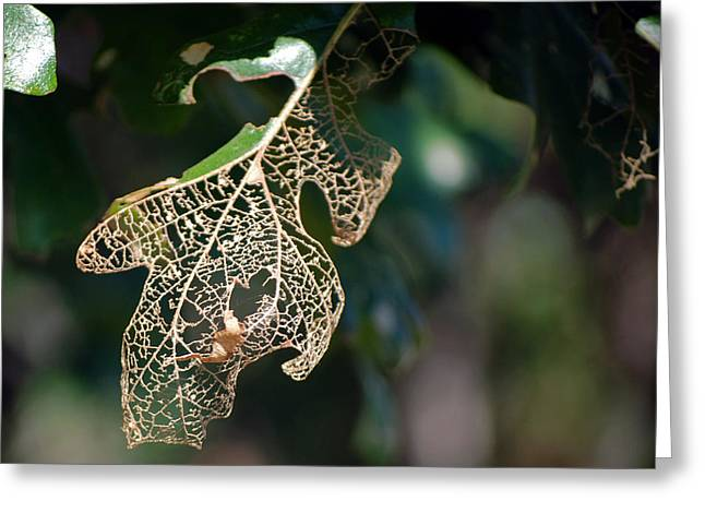 Bokeh Of Leaf Greeting Card