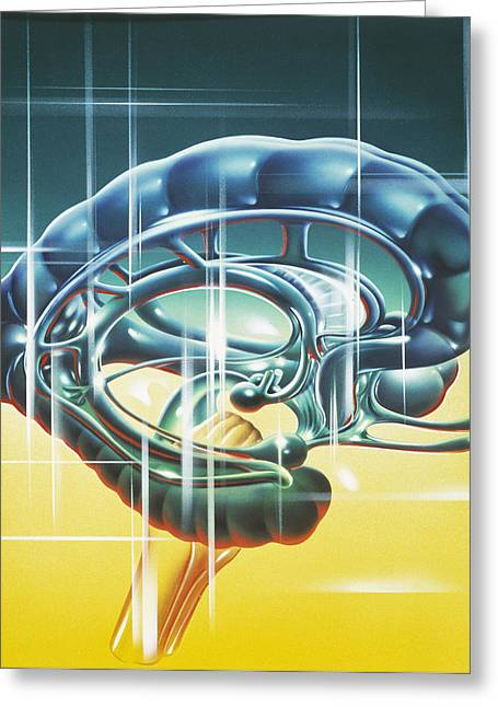 Brain Limbic System Greeting Card by John Bavosi