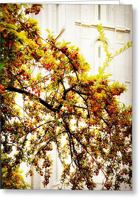 Branch Of Heaven Greeting Card by La Rae  Roberts