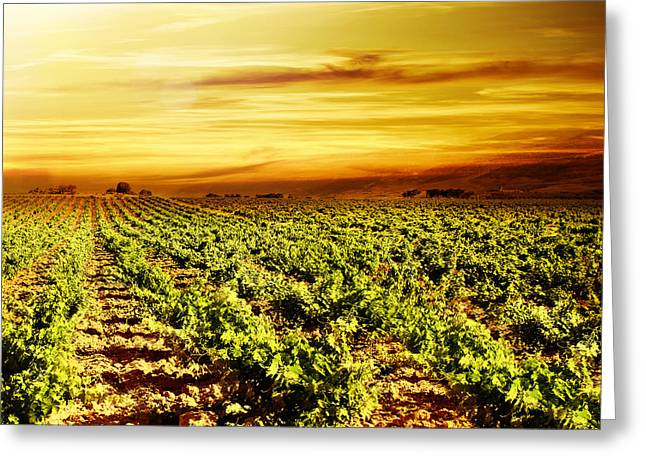 Bright Sunset At Vineyard Greeting Card by Anna Om