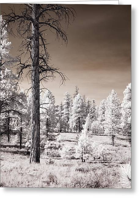 Greeting Card featuring the photograph Bryce Canyon Infrared Trees by Mike Irwin