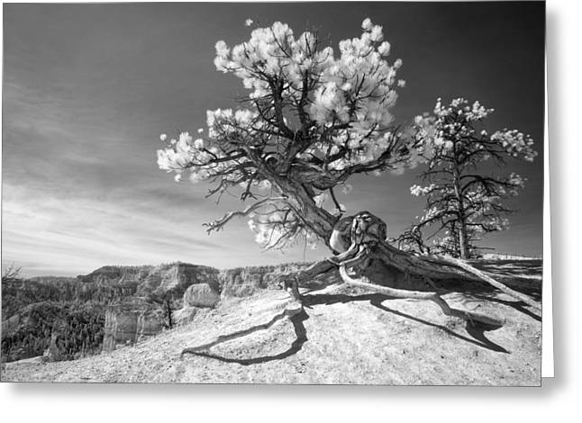 Greeting Card featuring the photograph Bryce Canyon Tree Sculpture by Mike Irwin