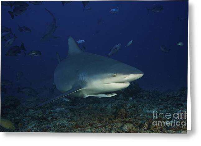 Bull Shark Surrounded By Reef Fish Greeting Card by Terry Moore