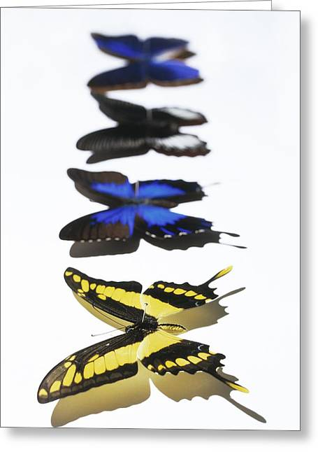 Butterflies Greeting Card by Lawrence Lawry