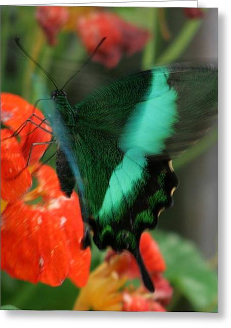 Butterfly Abstraction Greeting Card by Valia Bradshaw