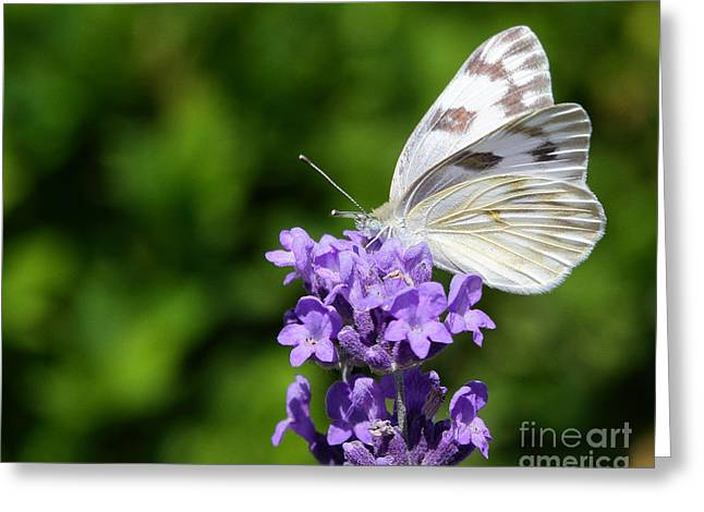 Butterfly And Flower Greeting Card by Steve Javorsky