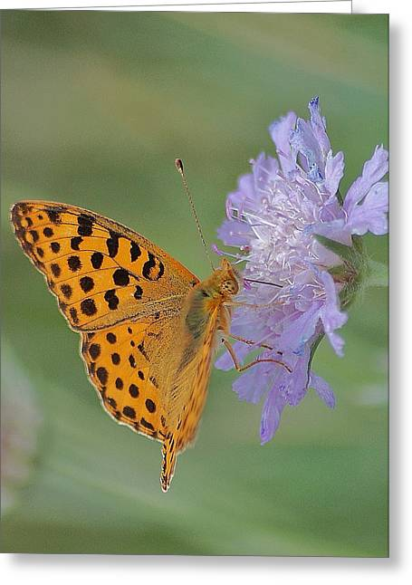 Butterfly On Right Position Greeting Card by Meeli Sonn