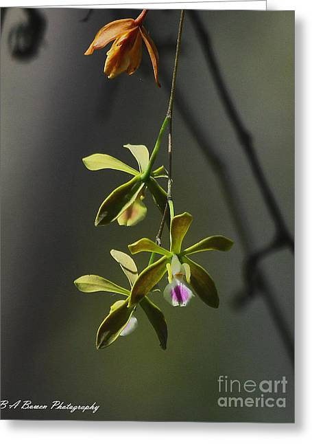 Butterfly Orchid Greeting Card by Barbara Bowen