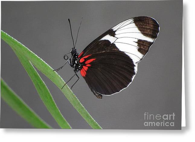 Greeting Card featuring the photograph Butterfly  by Tam Ryan