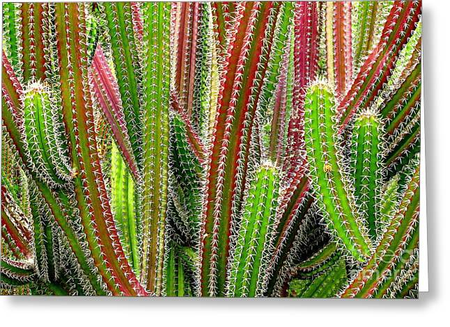 Greeting Card featuring the photograph Cactus by Ranjini Kandasamy