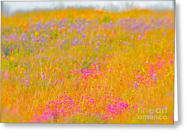 California Wildflowers No. 1 Greeting Card by Gus McCrea
