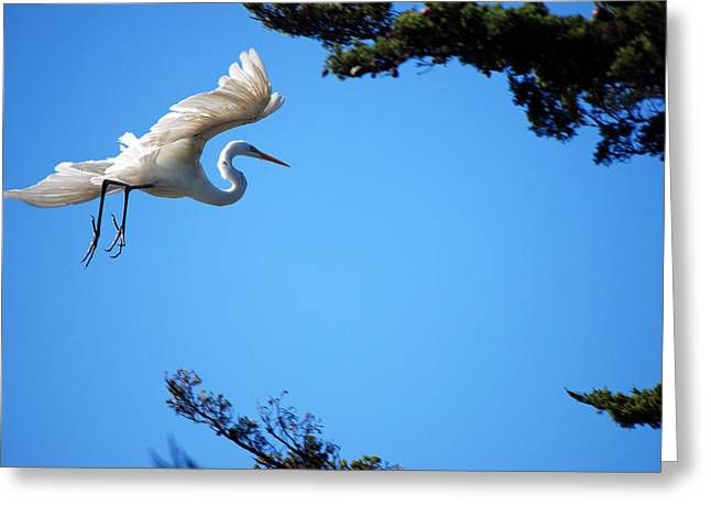 Carmel Egret Greeting Card