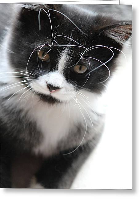 Cat In Chaotic Thought Greeting Card