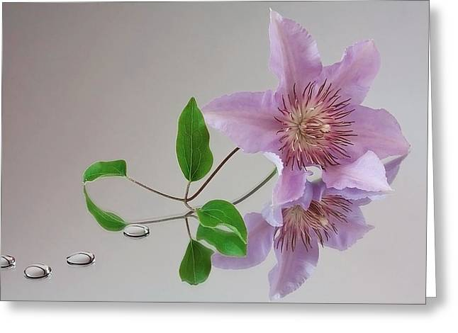 Greeting Card featuring the photograph Clematis 'filigree' by Shirley Mitchell