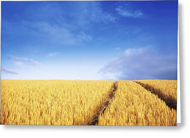 Co Carlow, Ireland Barley Greeting Card by The Irish Image Collection