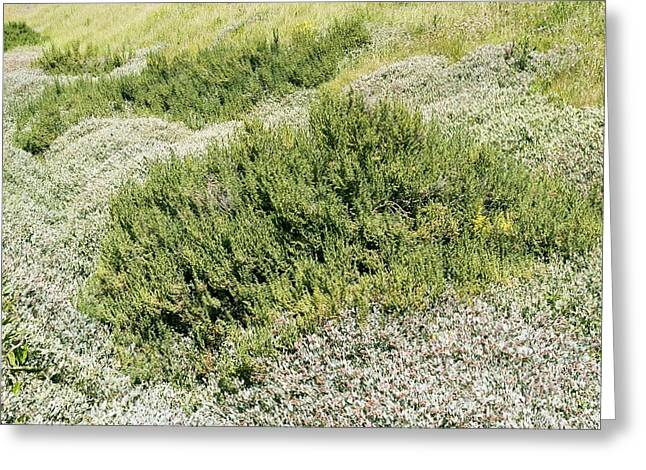 Coastal Vegetation Greeting Card by Adrian Bicker